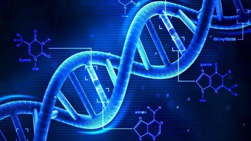 エイジングケアの最終兵器と言われる美容成分、ヒト幹細胞とは・・・?