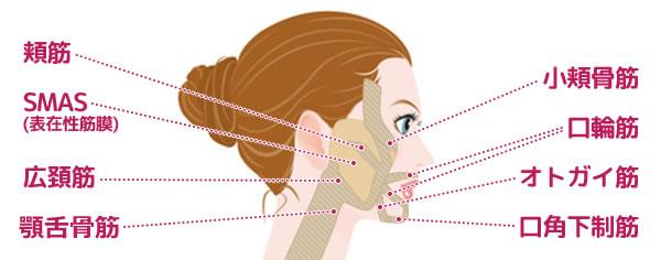 小顔マッサージの方法とその効果について